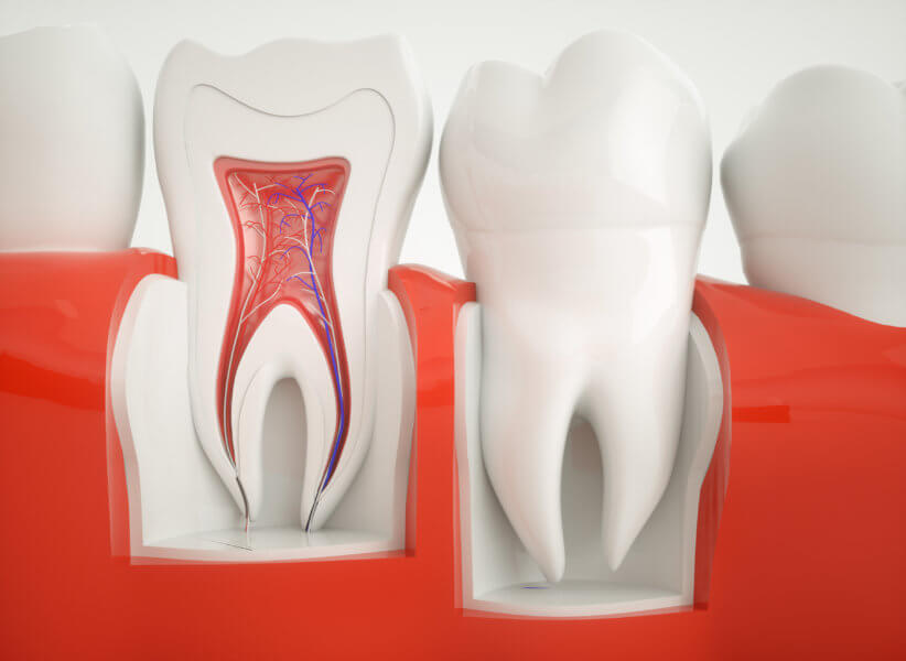 root canals Anatomy of healthy teeth
