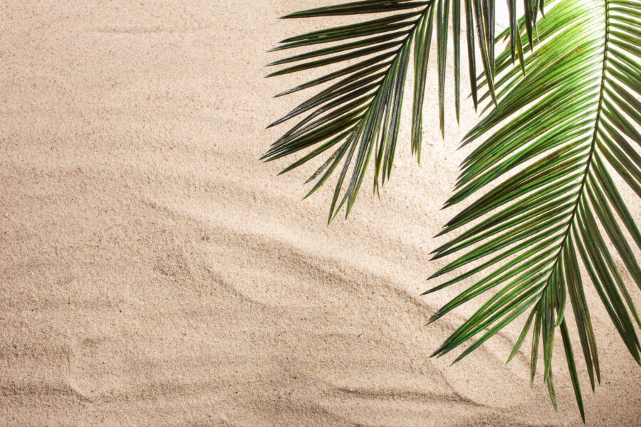 benefits of working in Florida Cross and Palm Tree Leaves on sand. Palm sunday concept.